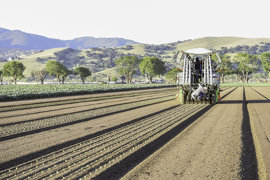 Automated Transplanter