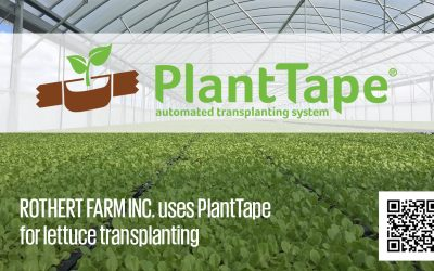 Rothert Farm increases lettuce yield, cuts transplanting costs with PlantTape