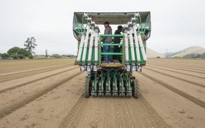 Transplanting seedlings on a flexible schedule: PlantTape gives growers logistical freedom